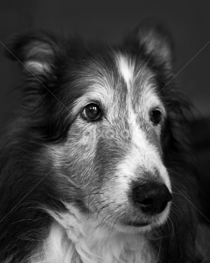 Scout   Portraits   Animals - Dogs   Pixoto