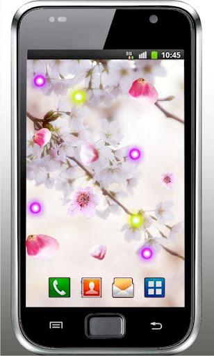 Sakura Photo live wallpaper