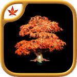 Fire Maple Games Collection v1.0.3