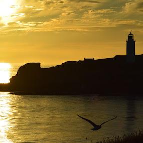 Golden Jewell by Lynnie Adams - Landscapes Sunsets & Sunrises ( lighthhouse, silhouette, sunset, landscape, golden,  )