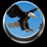 Bird Calls, Sounds & Ringtones 2.0.3