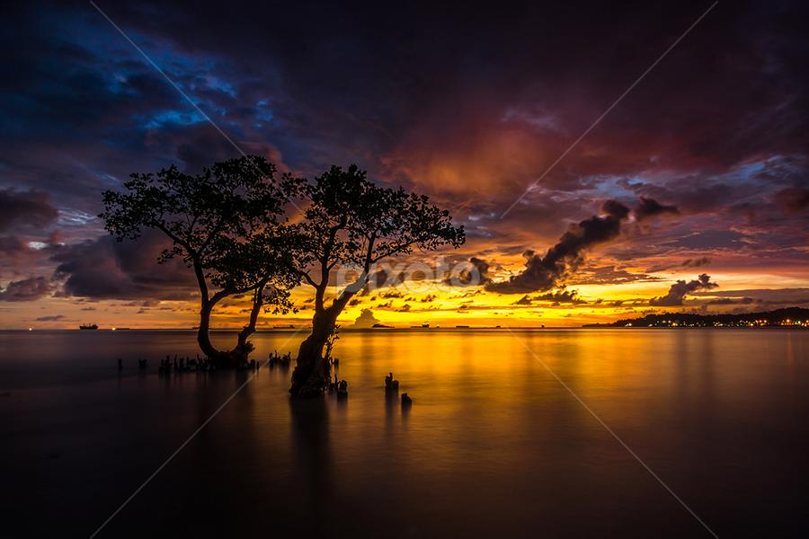The Couple by Ade Noverzan - Landscapes Sunsets & Sunrises ( sunset, trees, beach, dusk )