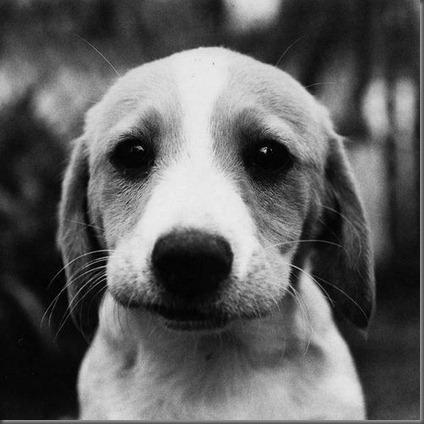 Dog Finder - Find A Puppy