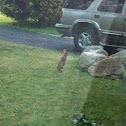 Wild bunny rabbit