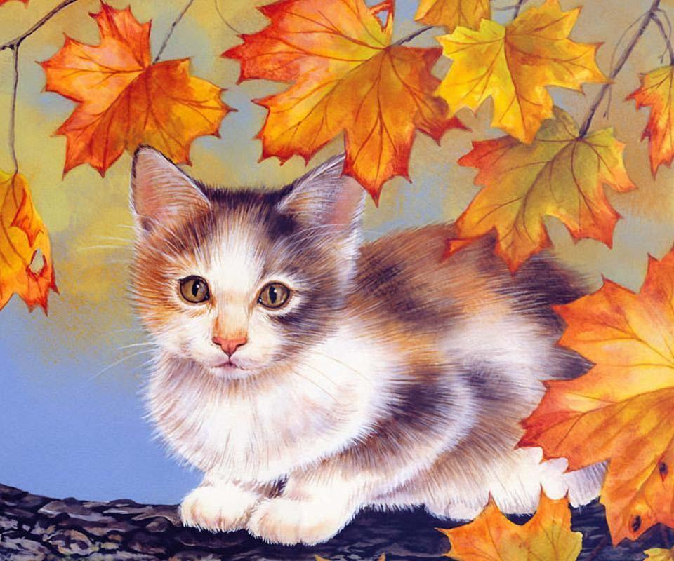 Funny Fall Cats Video