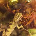 Neon Tree Dragon
