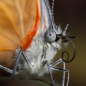 Up Close and Personal by Charlene Bacchioni - Animals Insects & Spiders ( butterfly, macro, wings, leaf, close up,  )