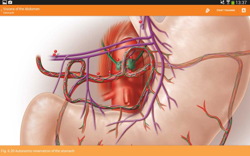 Sobotta Anatomy Screenshot 12
