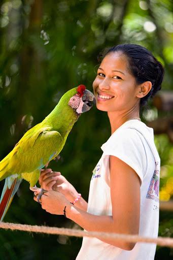 Puerto-Vallarta-Macaw - A military macaw near Puerto Vallarta.