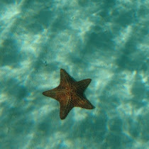 Sea Stars of Southern Mexico