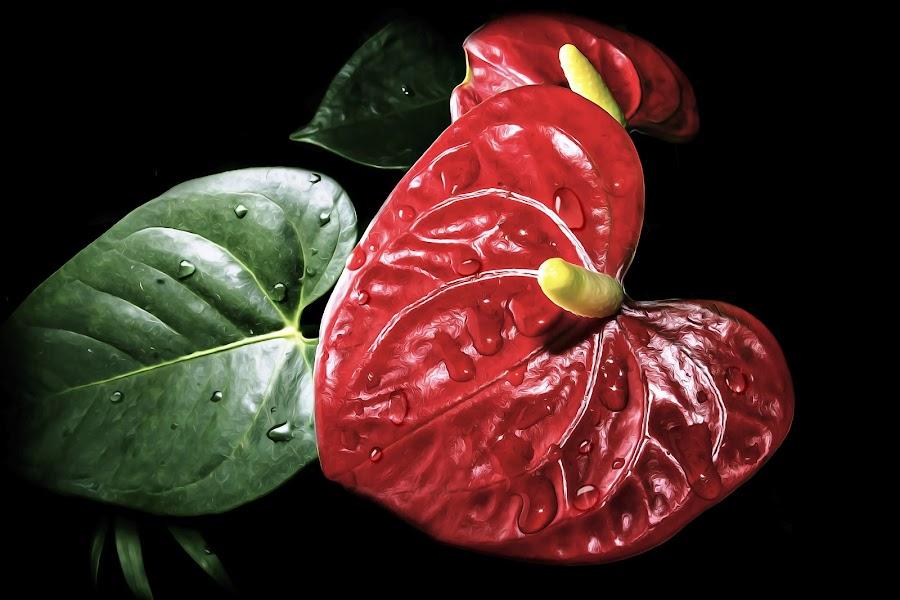ESTREVA by Michael Michael - Flowers Single Flower ( macro, hibiscus, details, close up, sharpening, flower,  )