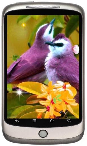 Spring Birds HD LWP