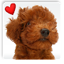 World of dog picture book 347 election APK icon