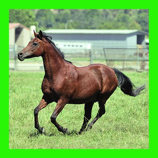 الخيول  الألغاز للأطفال والأس