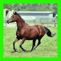 الخيول : الألغاز للأطفال والأس logo