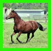 الخيول : الألغاز للأطفال والأس