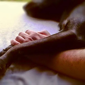 Togethet Forever Man and Dog by Nat Bolfan-Stosic - Animals - Dogs Portraits ( hand, leg, forever, dog, together )