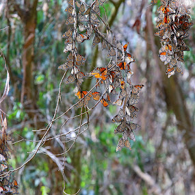 butterfly grove  by Elvis Gutierrez - Uncategorized All Uncategorized