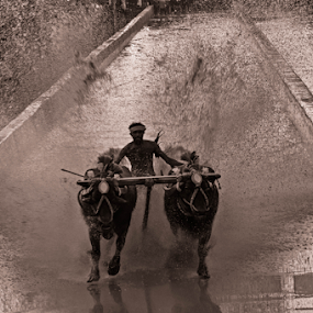 Splash by Ramya Raju - Black & White Sports ( kambla, splash, tulunadu, buffalo race, india, karnataka,  )