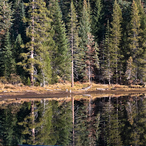 cold or warm by GUILLAUME FUNFROCK - Landscapes Waterscapes ( water, reflection, benches, bench, tree, wood, colors, green, forest, object, furniture, public )