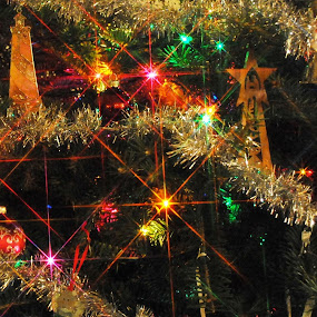 The Stars are brightly shining! by Ken Orr - Public Holidays Christmas ( lights, tree, christmas )