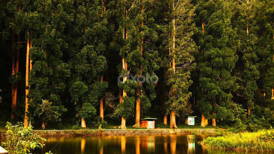 Morning shine by Gunawan Wijaya - Landscapes Mountains & Hills ( morning shine, trees, landscape,  )