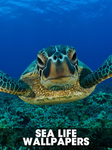 Sealife Wallpapers images
