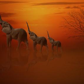 Tiga gajah by Azay Boyan - Digital Art Animals
