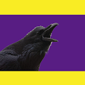A Raven's Call - Gameday Noise icon