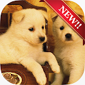 Cute Dog Wallpapers icon