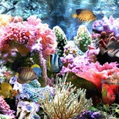 Coral Reefs n Exotic Fish