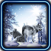 Snow Wolf HD live wallpaper