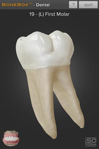 BoneBoxu2122 - Dental Lite  screenshots 3