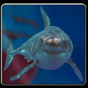 Underwater Shark Dash Scene