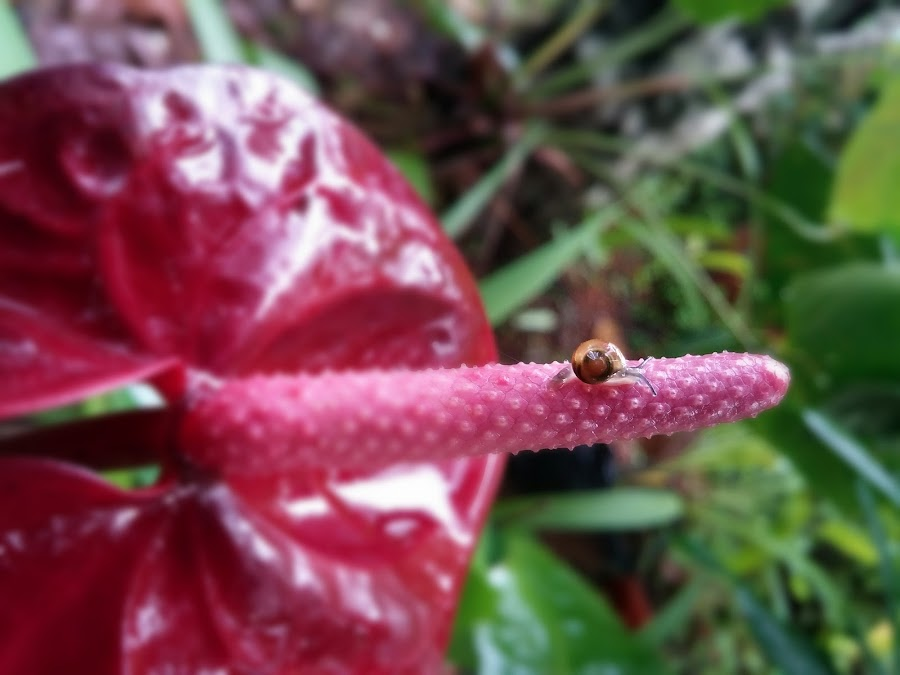 snail by Vahidha Azad - Instagram & Mobile Android ( lg, slow, snail )