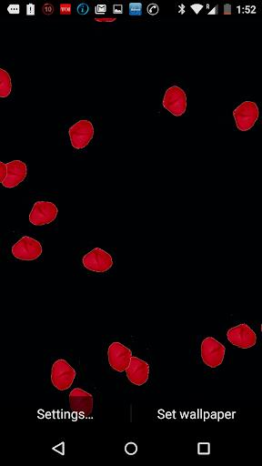Petals Valentines Day LW