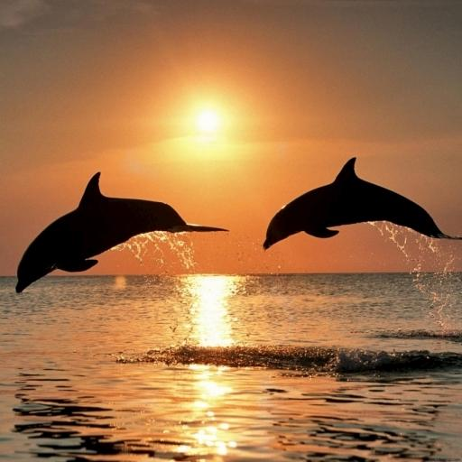 Dolphins Water LWP