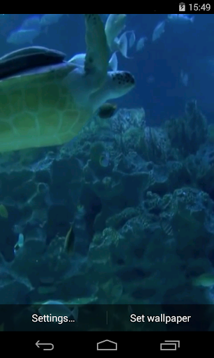 실제 수족관 비디오 라이브 배경 화면