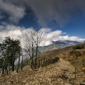 Way to Sandakphu by Kunal Karmakar - Landscapes Mountains & Hills ( hills, sandakphu, mountains, trekking, clouds and mist )