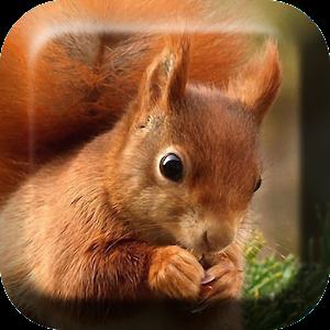 Σκίουρος Εικονες για φοντο APK