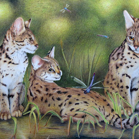 Spotted In Flight by Alicia McNally - Drawing All Drawing ( cats, colored pencil, pencil drawing, kittens, exotic cats, dragonflies, savannah cats )