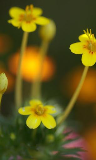 【免費休閒App】zz[Unpublish]Flower Puzzle-APP點子