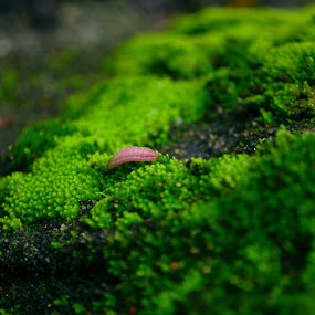 Rong chơi by Lê Thị Thanh  Tâm - Nature Up Close Other Natural Objects