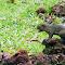 squirrel-2.jpg