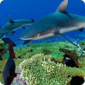 Sharks Live Wallpaper HD