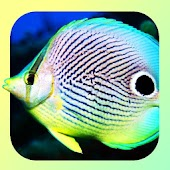 830 Reef Fishes