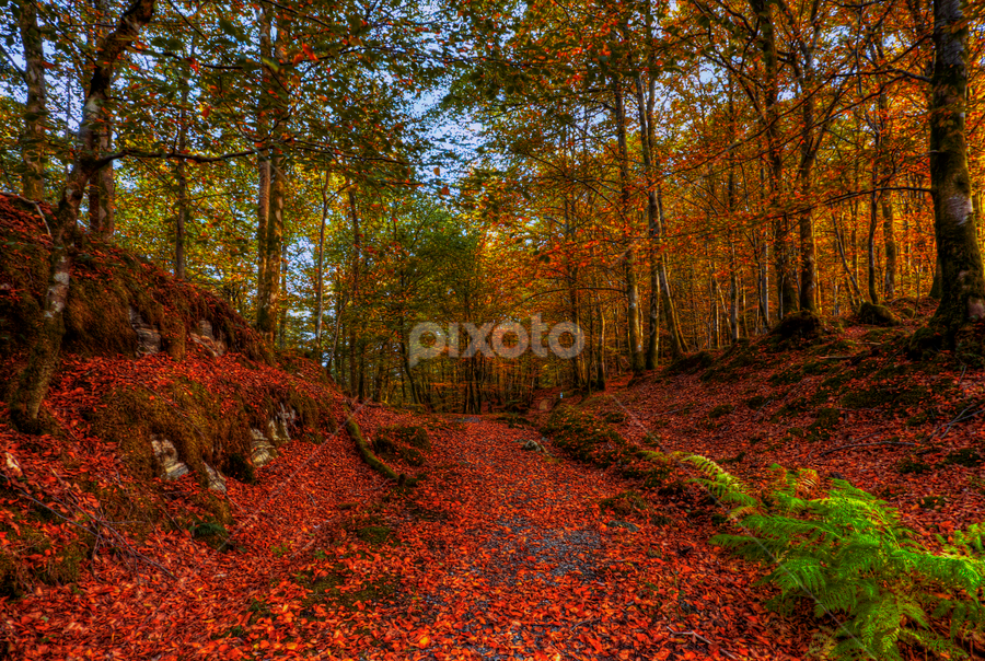by Rune Askeland - Landscapes Forests ( autumn, fall, colors of fall )
