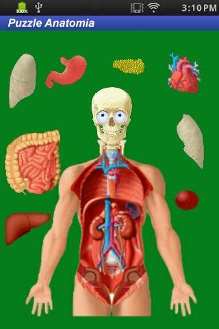 Puzzle Anatomy gioco didattico
