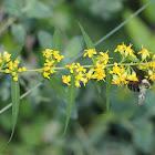 Bumble Bee habitat
