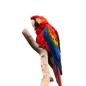 Parrot Red Sticker